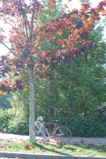 bike and light