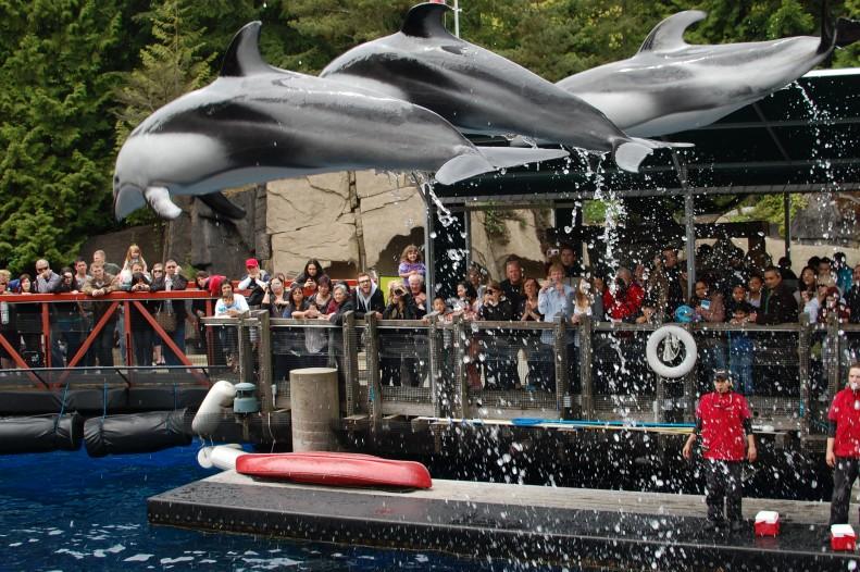 dolphin show at Vancouer Aquarium