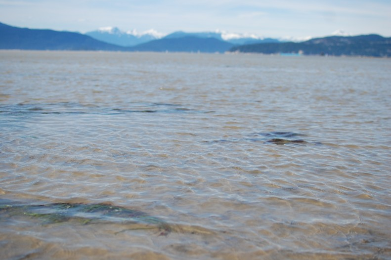 North shore from Spanish banks, Vancouver, low tide