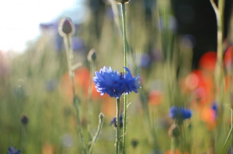flowers, light, bokeh